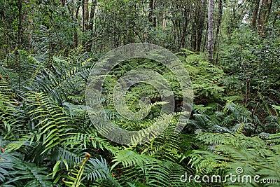 Garden Of Eden Stock Photo Image 52163854
