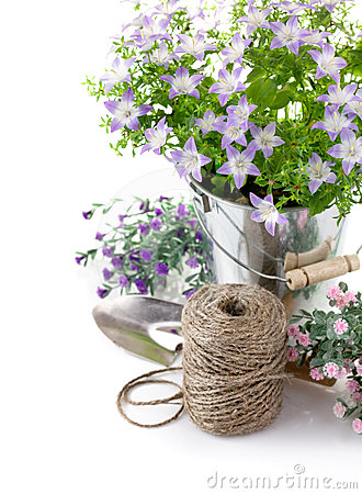 Garden equipment with violet flowers