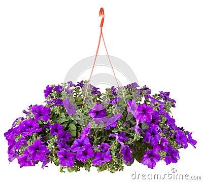 Free Garden Flower Royalty Free Stock Image - 19749436