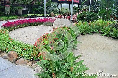 Garden flower8