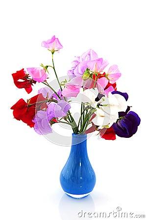 Garden flowers vetchling