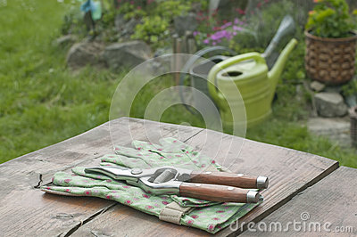 Garden gloves and clippers in garden
