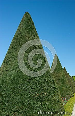 Garden with green shrub cropped
