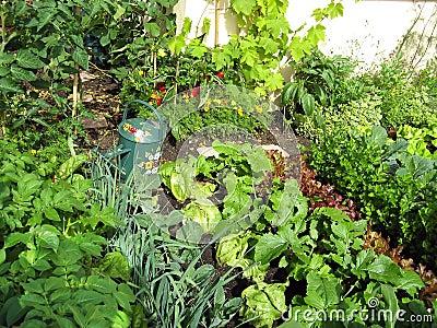 Garden of greens
