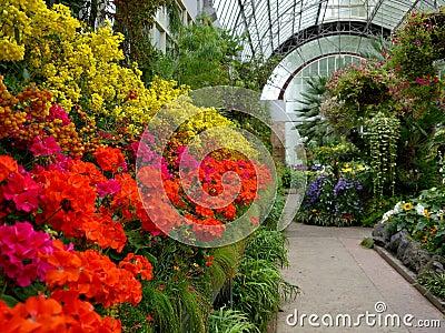 Garden: historic glasshouse flower display - h