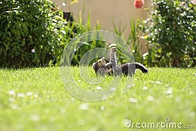 Garden kitten playing