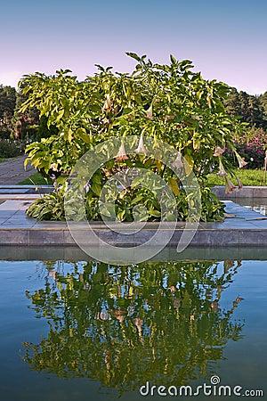 Garden with laguna
