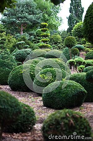 Garden Landscape. Topiary