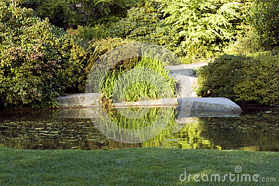 Garden with nice lawn and pond