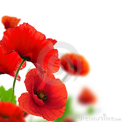 Free Garden Of Flowers - Red Poppies Stock Photos - 22675893