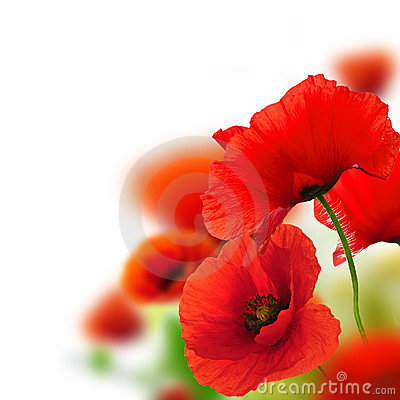 Free Garden Of Poppies, Flower Background Stock Image - 23500961