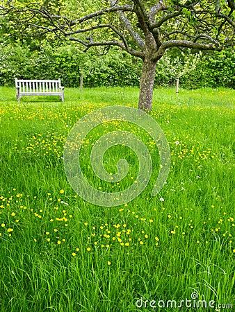 Garden Orchard, England
