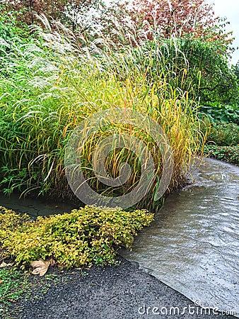 Free Garden Path And Decorative Grass Royalty Free Stock Photos - 54701628