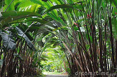 Garden path under Heliconia plant