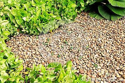 Garden pebble stones