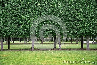 Garden in Peterhof