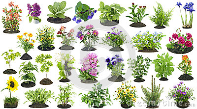 Garden plants grow in soil set