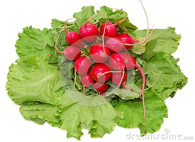 Garden radish bunch on green leaves