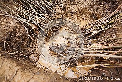 Garden seedling tree roots