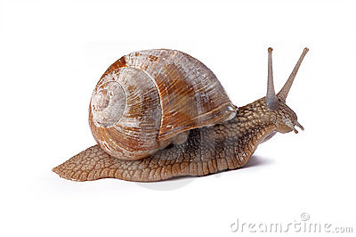 Garden Snail Royalty Free Stock Photos - Image: 2100928