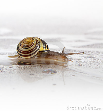 Free Garden Snail With Water Droplets Royalty Free Stock Image - 21896166