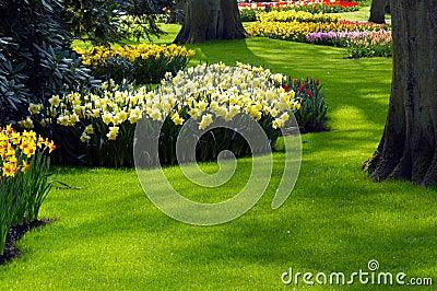 A garden in spring