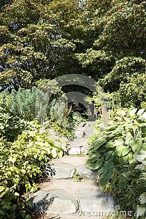 Garden step path