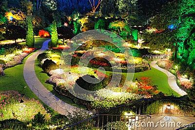 Garden summer night