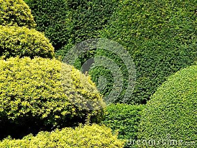 Garden: topiary hedge detail