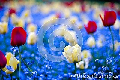 Garden win flowers