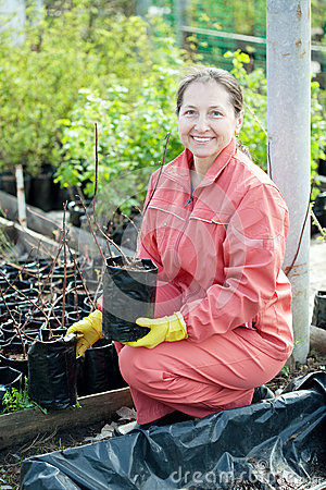 Gardener chooses bush sprouts