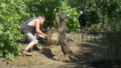 Gardener cuts tree with chainsaw near vine grapes. Slow motion stock footage