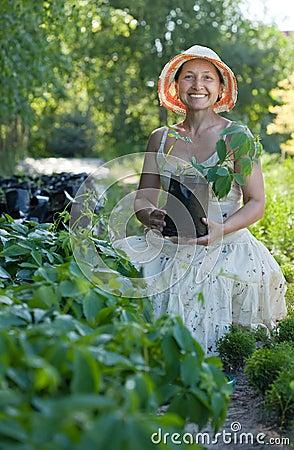 Gardener with Parthenocissus tricuspidata sprouts