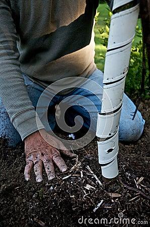 Free Gardener Plants A Tree Stock Images - 9587494