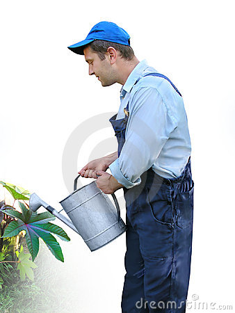 Gardener - worker in working clothes, watering plants with watering can