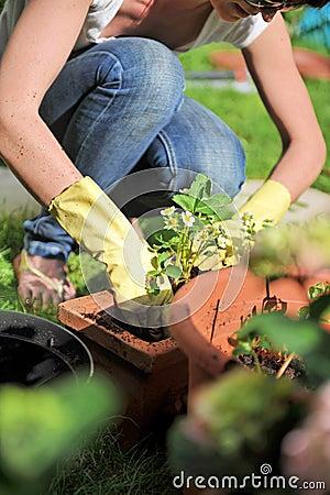 Free Gardening Royalty Free Stock Photos - 5208828