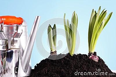 Gardening Concept!