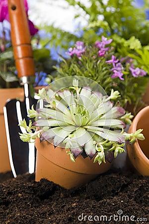 Gardening concept closeup on flower