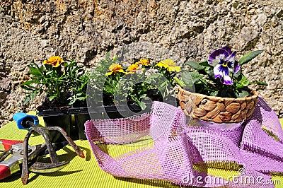 Gardening decorating flower spring