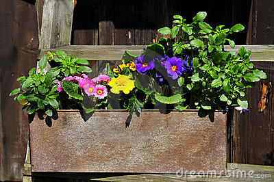 Gardening decorating flower spring