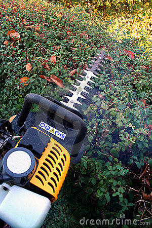 gardening hedge cutting