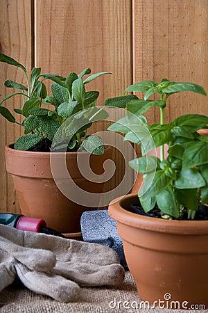 Gardening - Herbs in Pots