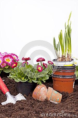 Free Gardening- Planting Flowers Stock Photography - 23584462
