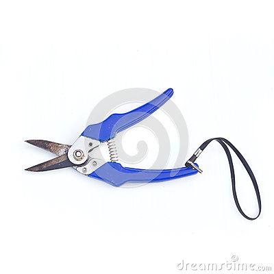 Gardening secateurs for cutting branches isolated