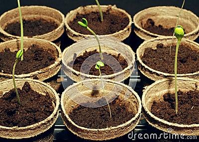 Gardening starts