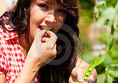 Gardening in summer - woman harvesting peas