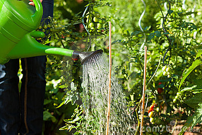 Gardening in summer - woman watering plants