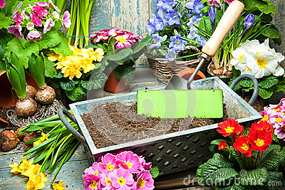 Gardening Stock Photo Image 50433317