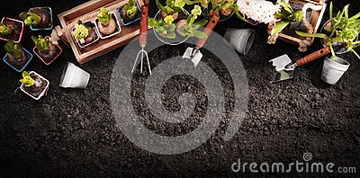 Gardening Tools and Plants. Spring Garden Works Concept Stock Photo