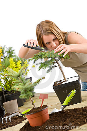 Free Gardening - Woman Trimming Bonsai Tree Royalty Free Stock Photos - 14292348